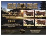 Shiloh Cattle Company Trendsetter Bull & Replacement Heifer sale