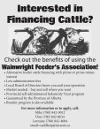 Interested in Financing Cattle?