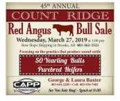 45th ANNUAL COUNT RIDGE Red Angus Bull Sale
