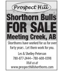 Shorthorn Bulls FOR SALE  Meeting Creek, AB