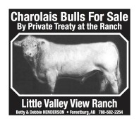 Charolais Bulls For Sale By Private Treaty at the Ranch