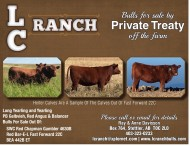 Bulls for sale by Private Treaty off the farm