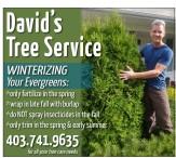 David's Tree Service  WINTERIZING Your Evergreens